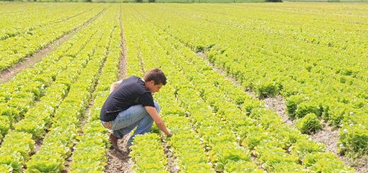 agricoltura_bioecogeo