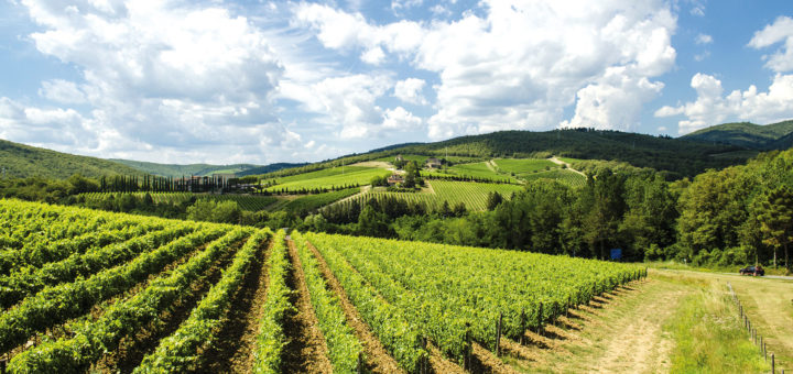 vineyards in Tuscany Chianti area